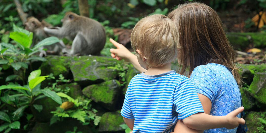 3 Fun Ways to Teach Your Kids about Wildlife in Bali