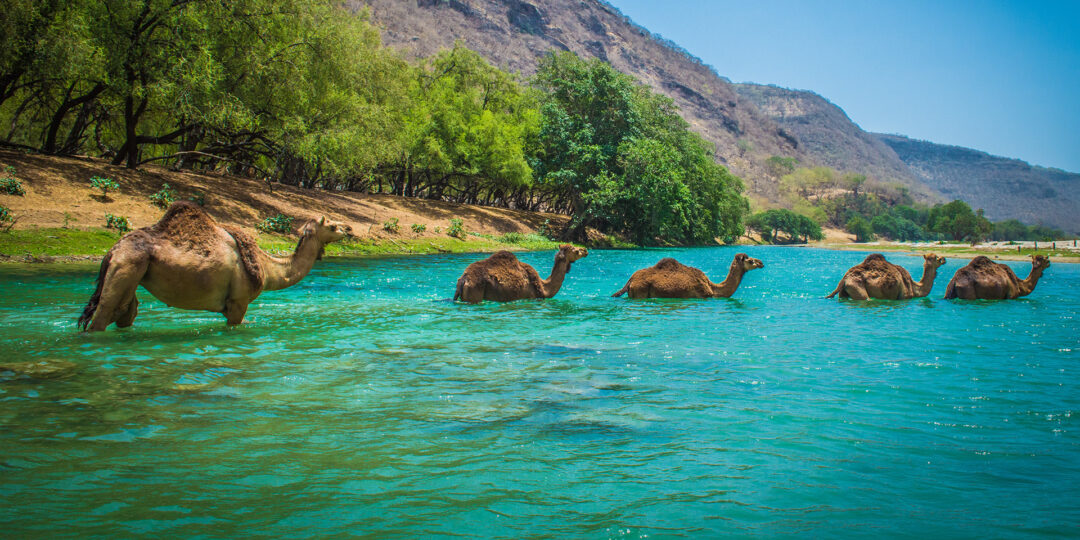 4 Reasons You Don't Want to Miss Salalah this Fall