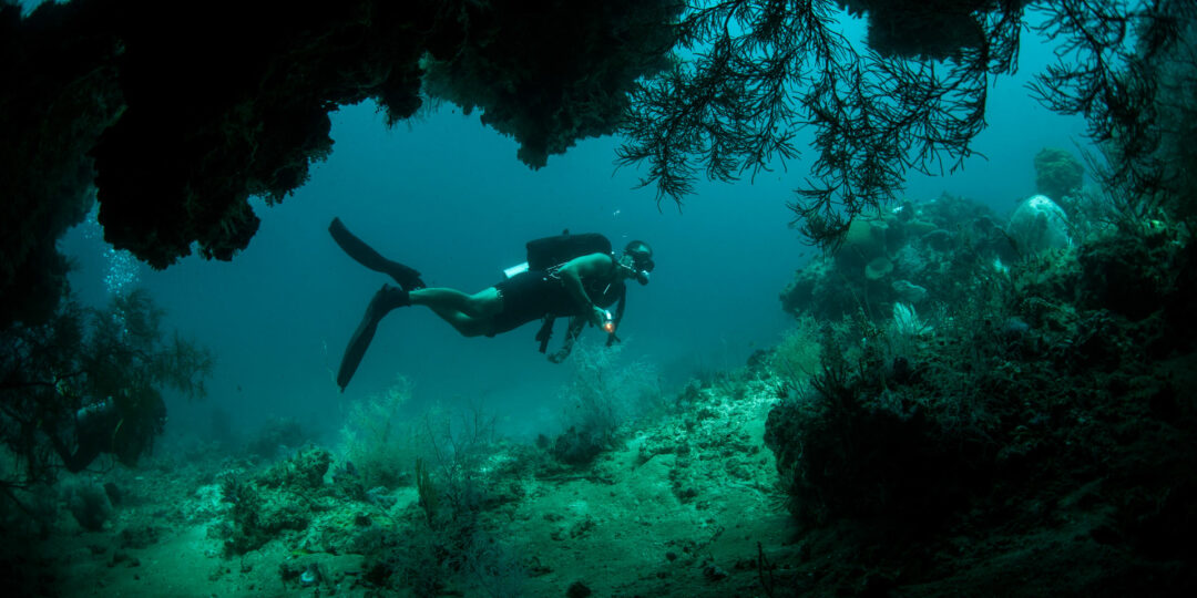 5 Places to Plan Your Winter Dive in Asia
