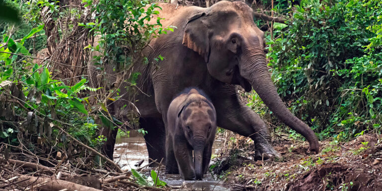 3 Activities for the Animal Lover in Luang Prabang