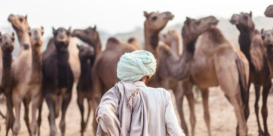 Photographer's Guide to the Pushkar Camel Fair