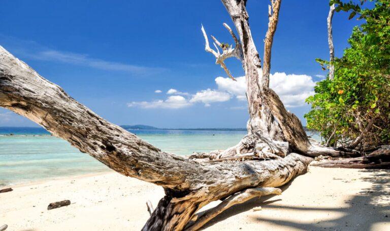 Elephant Beach on the Andaman and Nicobar Islands.