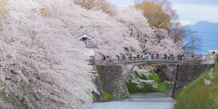 4 Yamagata Cherry Blossom Sites You Won't Want to Miss This Spring