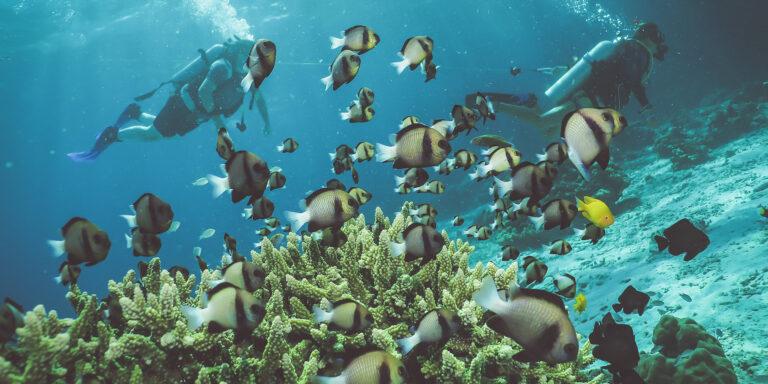 Diving Krabi and Phuket: 5 Interesting Sites Under the Andaman