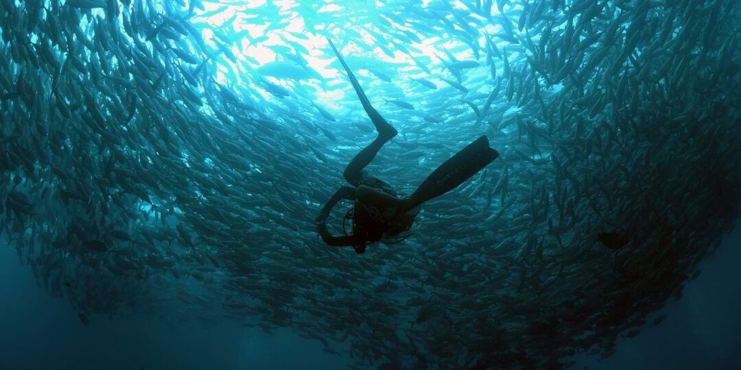 What Makes Sipadan the Best Dive Site in Malaysia?