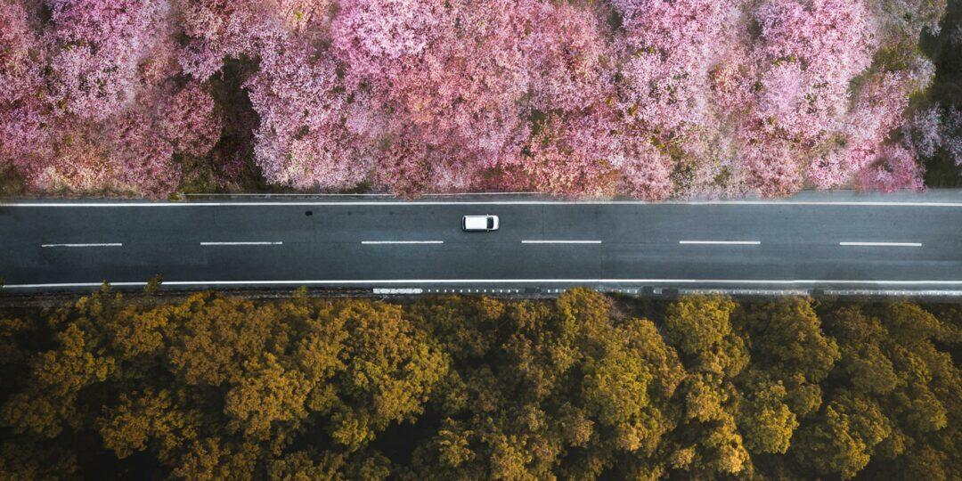 Shooting Sakura: Getting the Best Photos from Japan's Cherry Blossom Season
