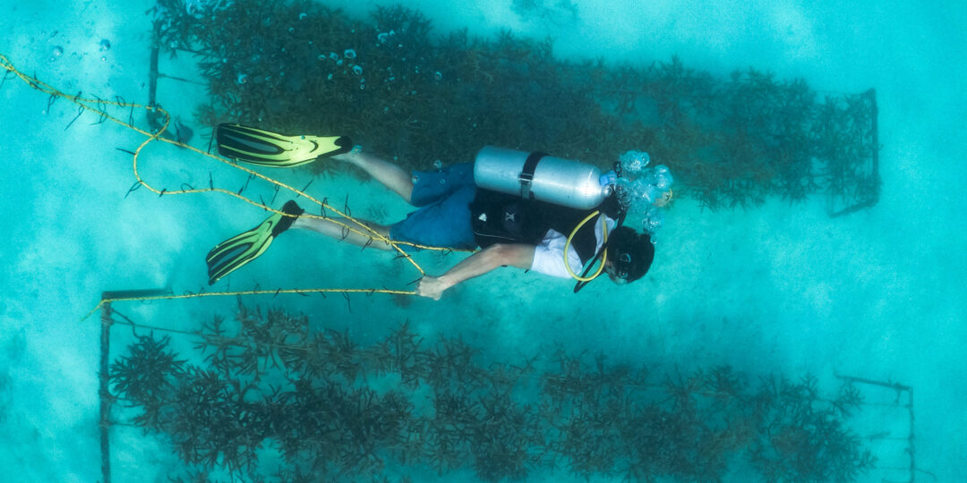Adopting Coral Reefs with Anantara in the Maldives
