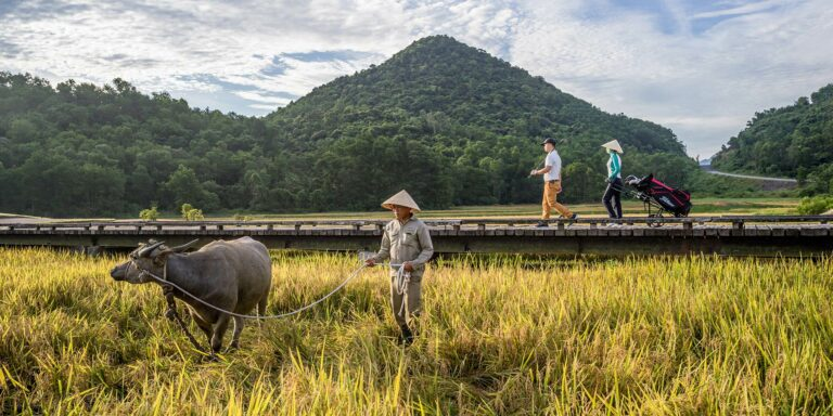 Water Buffalo Manicure Nick Faldo Course at Vietnam's Laguna Golf Lang Co