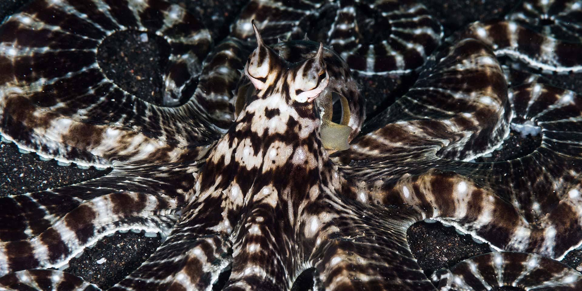 Lembeh-diving-header