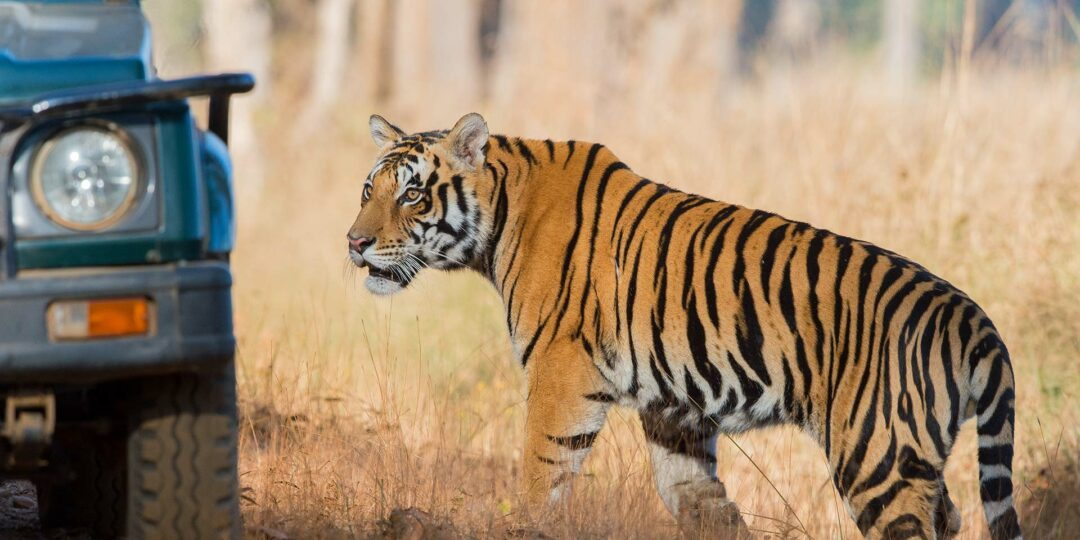Remote Lands Hot Winter Pick: Madhya Pradesh for the Wildlife